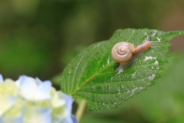 カタツムリの殻の表面は親水性なので汚れ難い